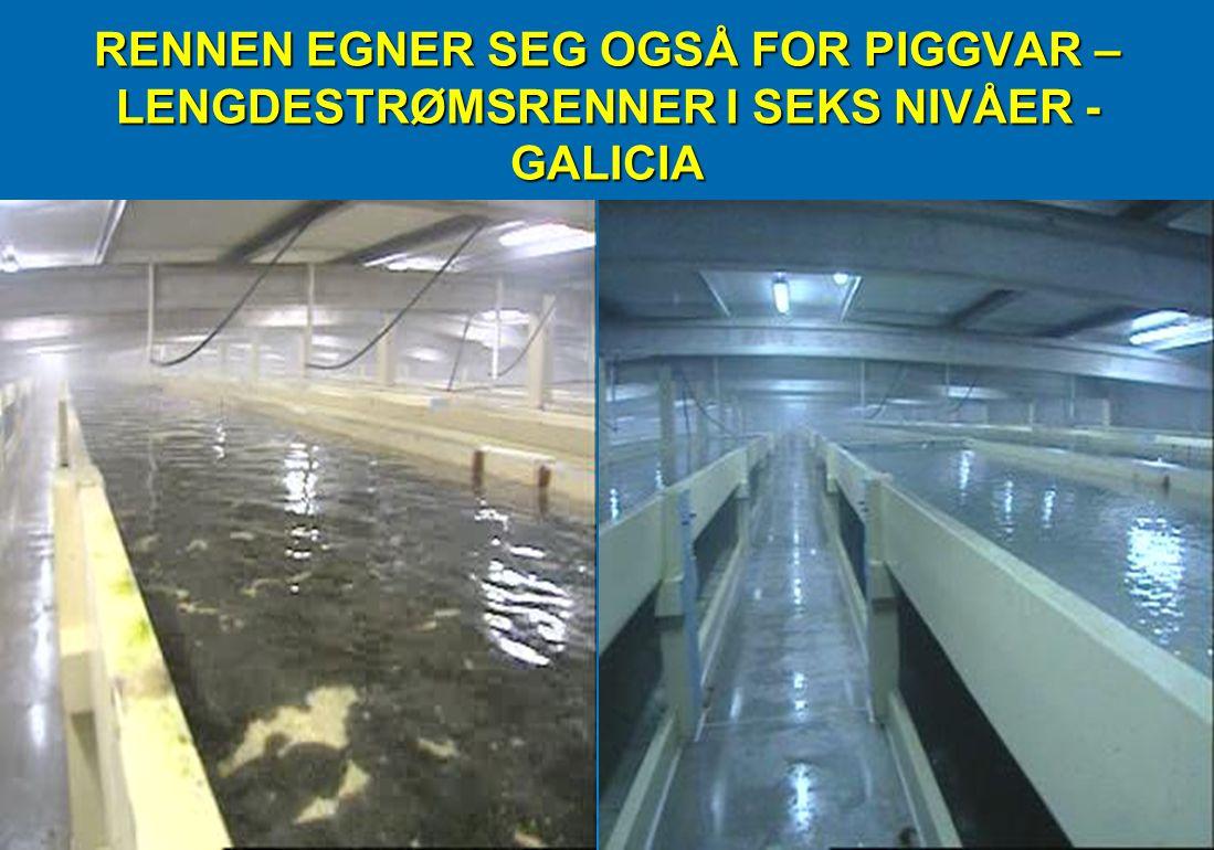 RENNEN EGNER SEG OGSÅ FOR PIGGVAR – LENGDESTRØMSRENNER I SEKS NIVÅER - GALICIA