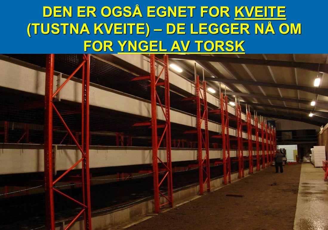 DEN ER OGSÅ EGNET FOR KVEITE (TUSTNA KVEITE) – DE LEGGER NÅ OM FOR YNGEL AV TORSK