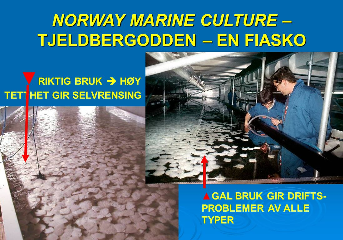 NORWAY MARINE CULTURE – TJELDBERGODDEN – EN FIASKO