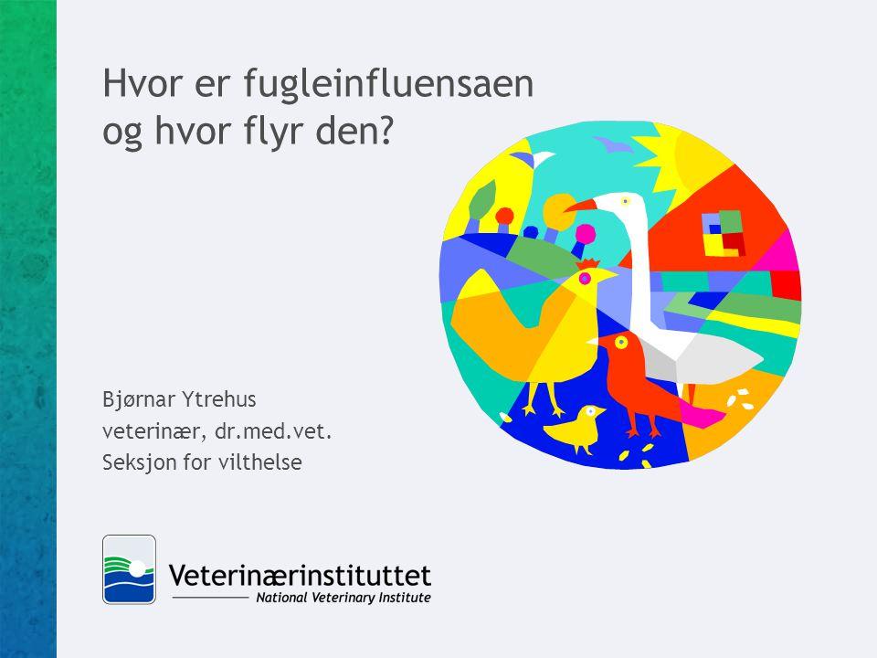 Hvor er fugleinfluensaen og hvor flyr den