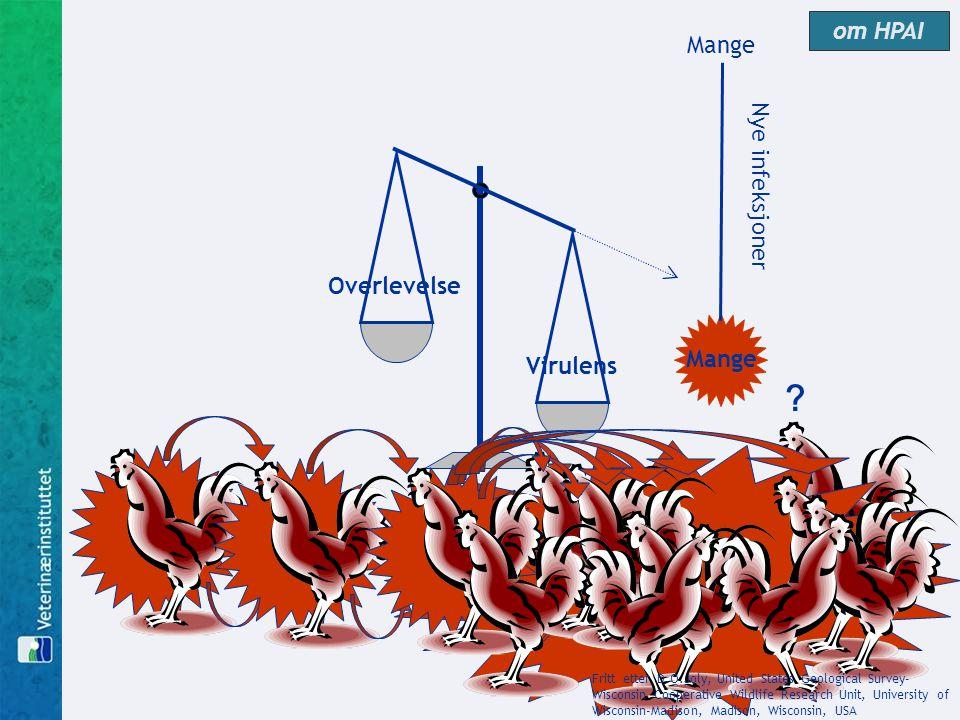 om HPAI Mange Nye infeksjoner Overlevelse Mange Virulens