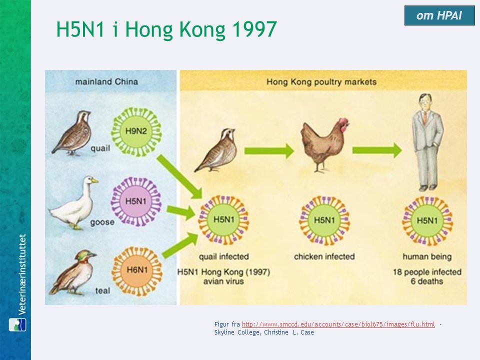 om HPAI H5N1 i Hong Kong 1997.