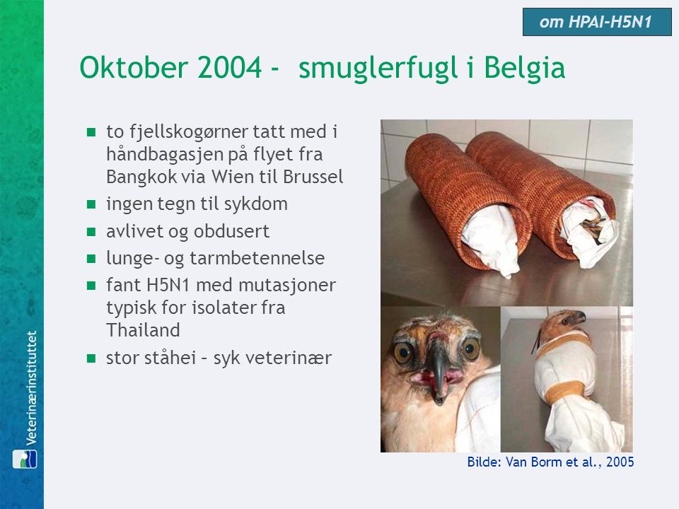 Oktober 2004 - smuglerfugl i Belgia