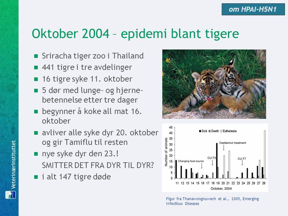 Oktober 2004 – epidemi blant tigere