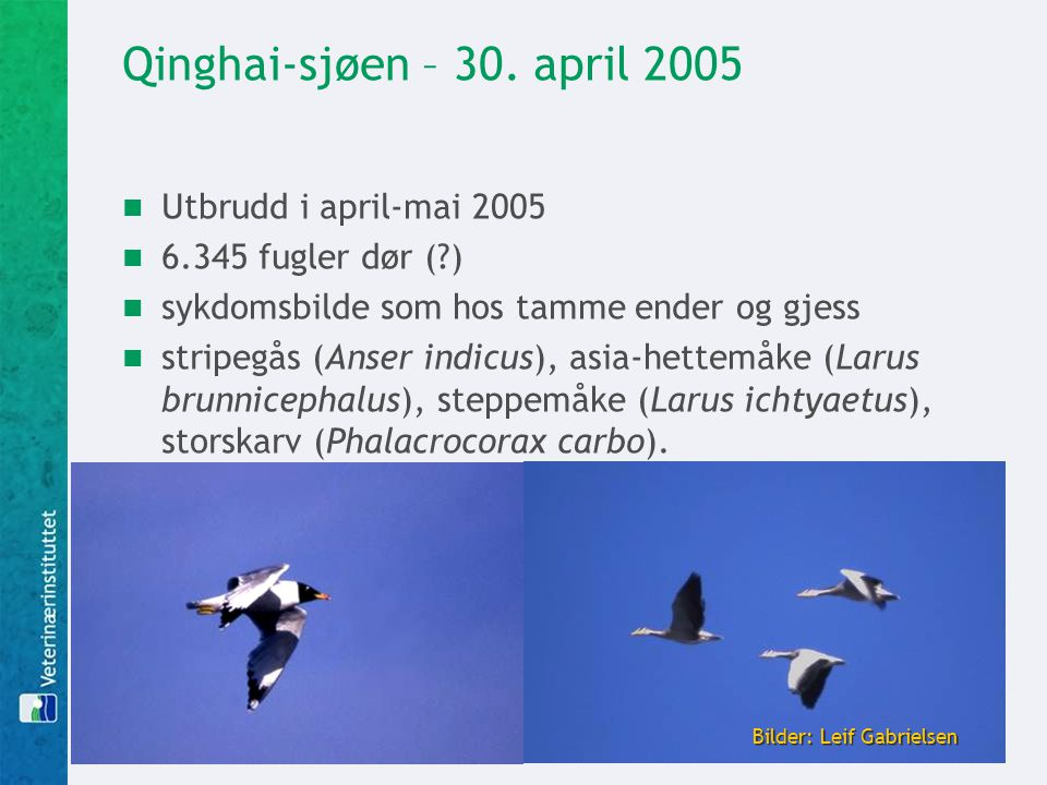 Qinghai-sjøen – 30. april 2005 Utbrudd i april-mai 2005