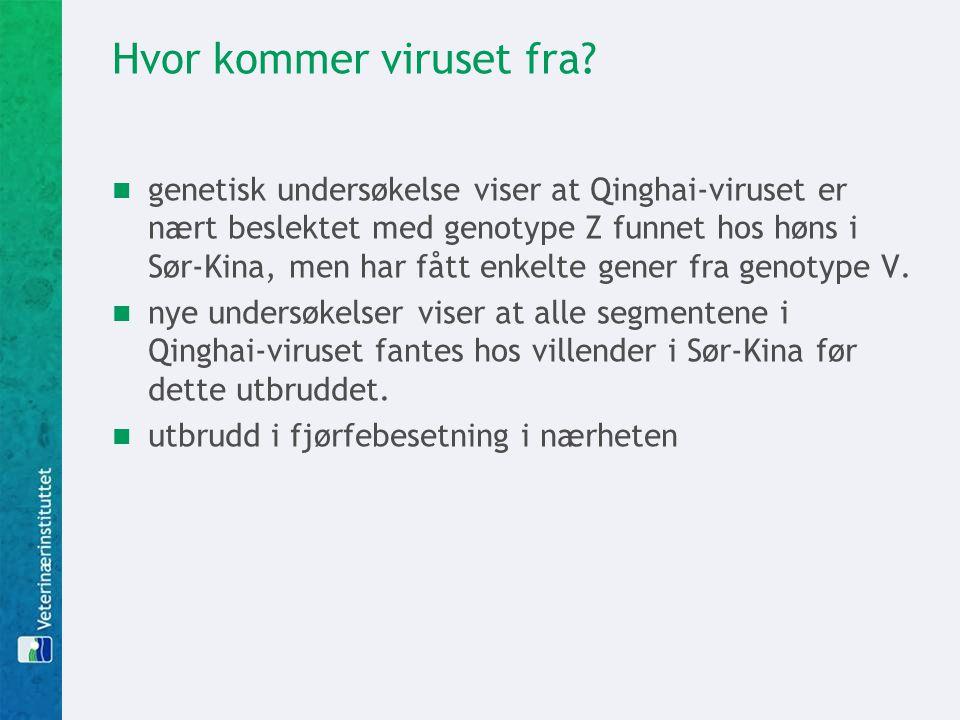 Hvor kommer viruset fra