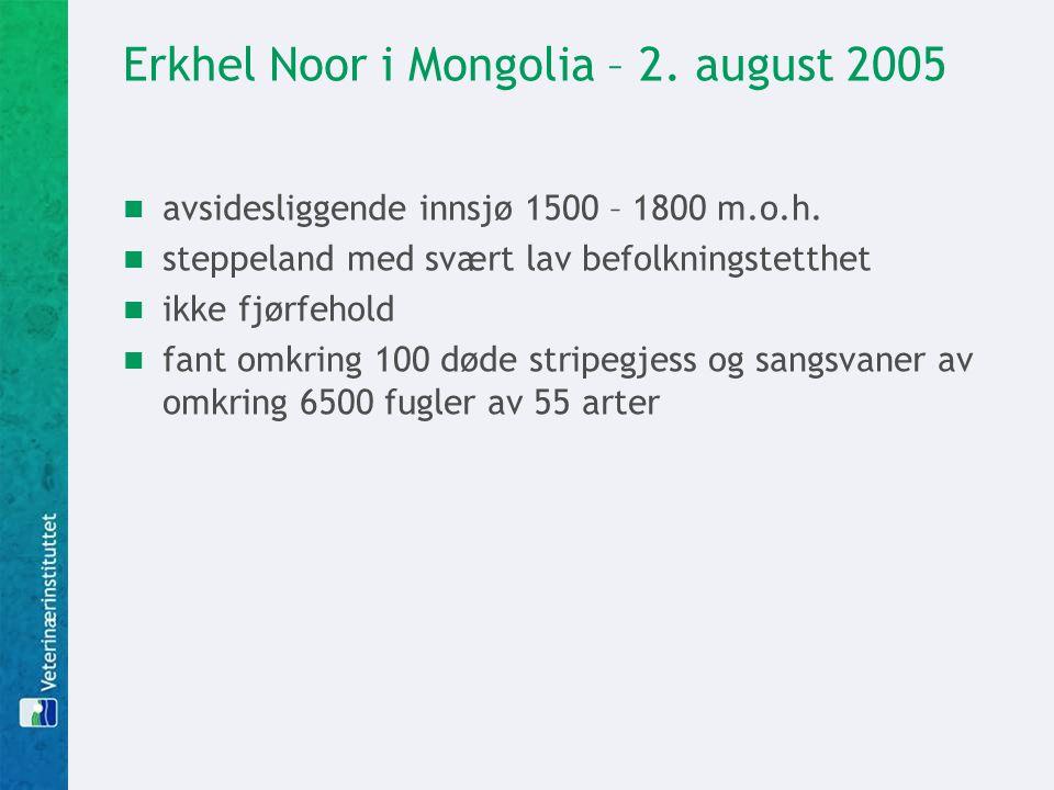 Erkhel Noor i Mongolia – 2. august 2005