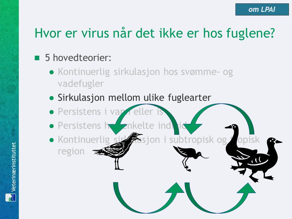 Hvor er virus når det ikke er hos fuglene