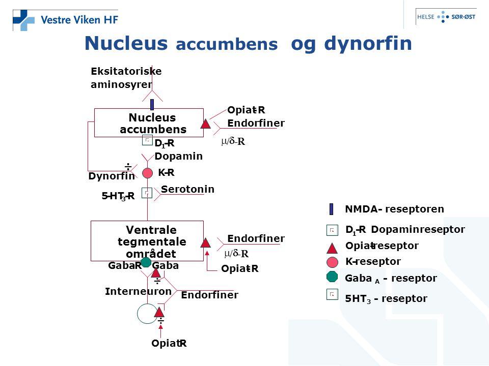 Nucleus accumbens og dynorfin