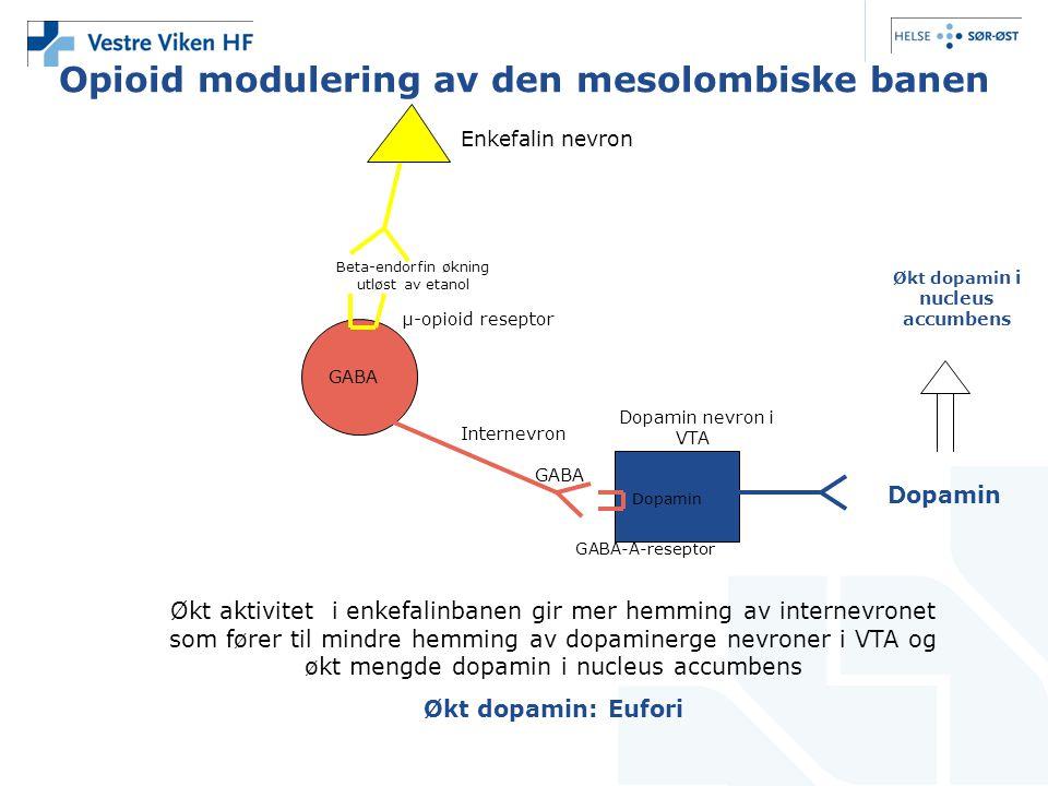 Opioid modulering av den mesolombiske banen