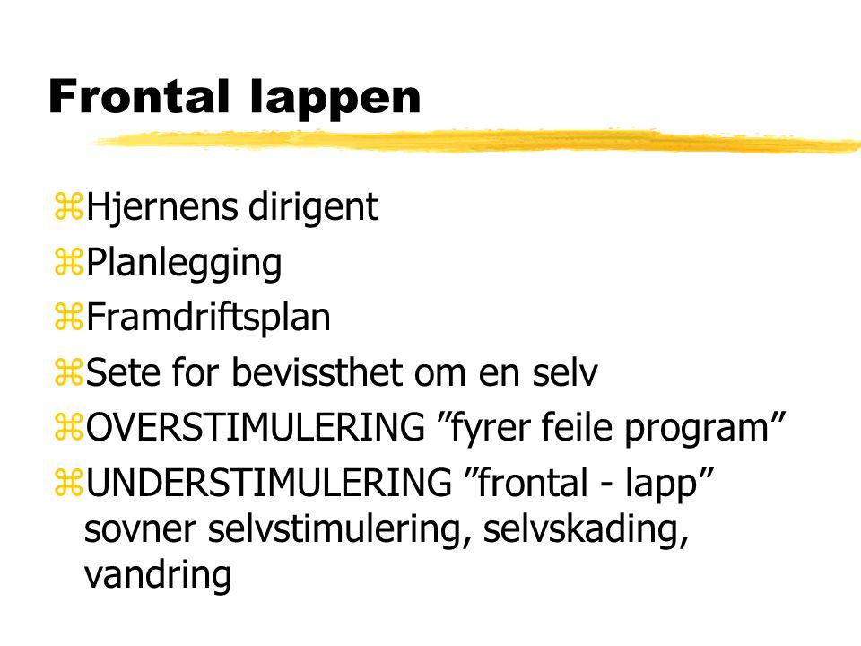 Frontal lappen Hjernens dirigent Planlegging Framdriftsplan