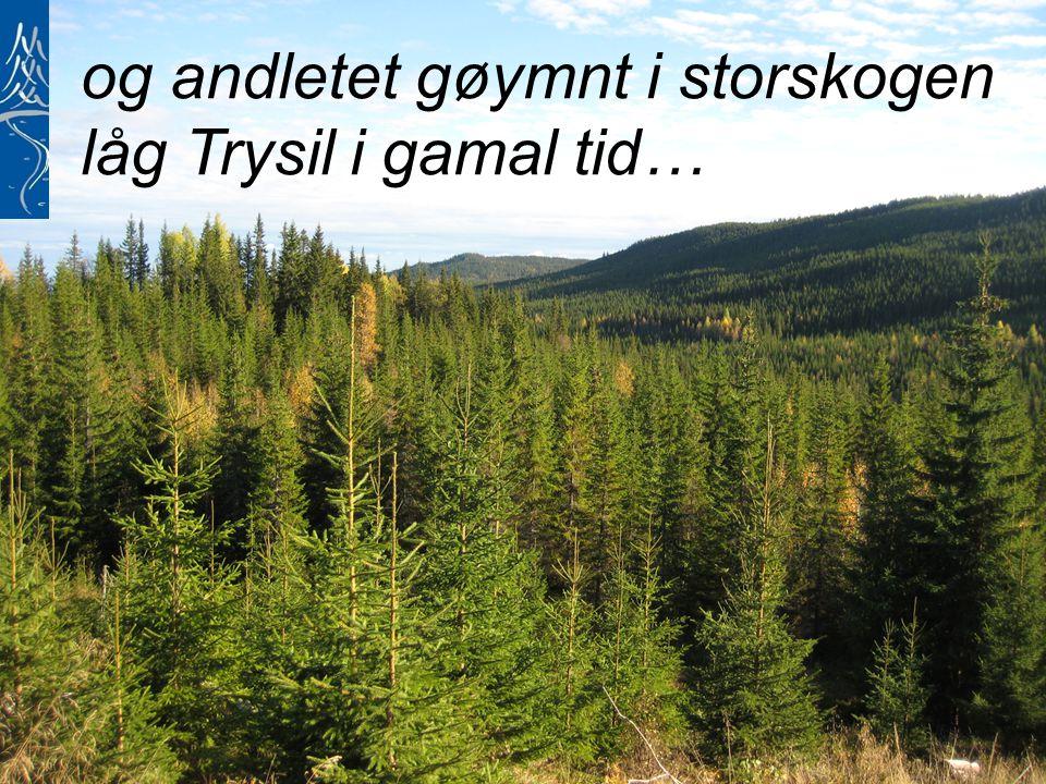 og andletet gøymnt i storskogen