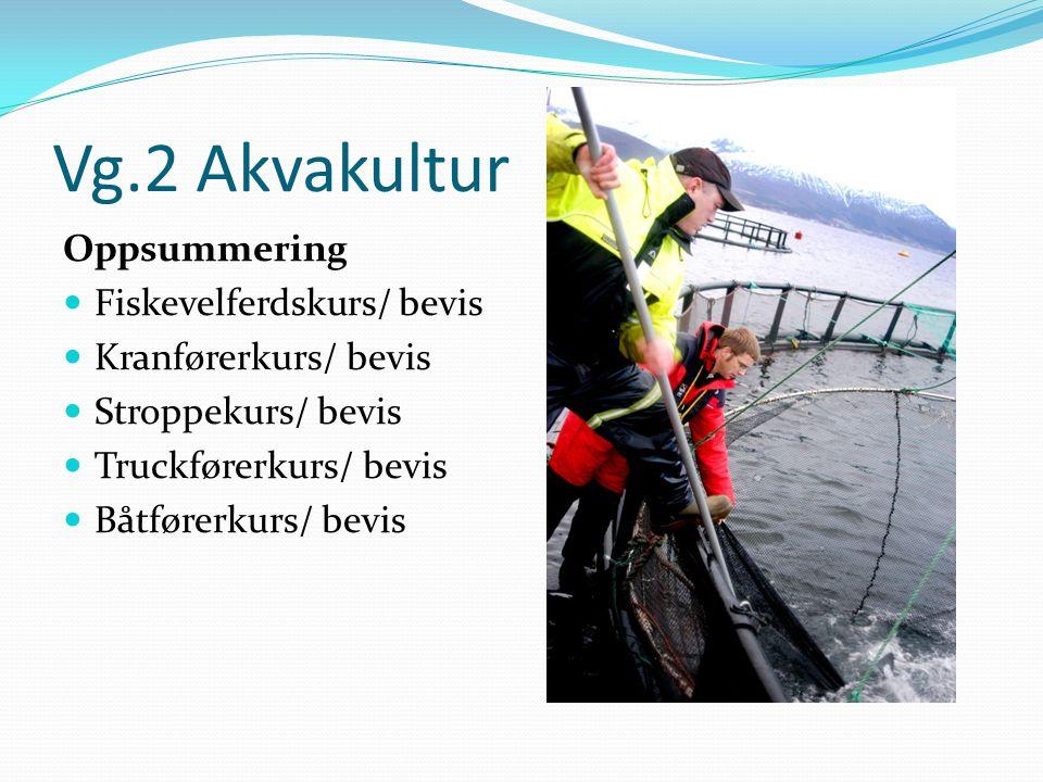 Vg.2 Akvakultur Oppsummering Fiskevelferdskurs/ bevis