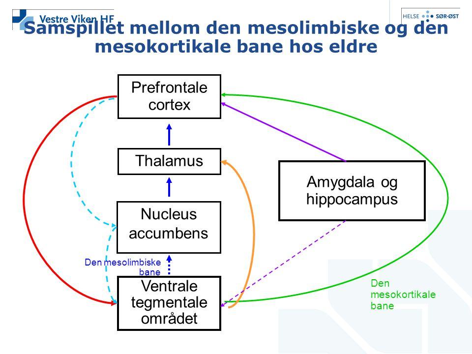 Samspillet mellom den mesolimbiske og den mesokortikale bane hos eldre