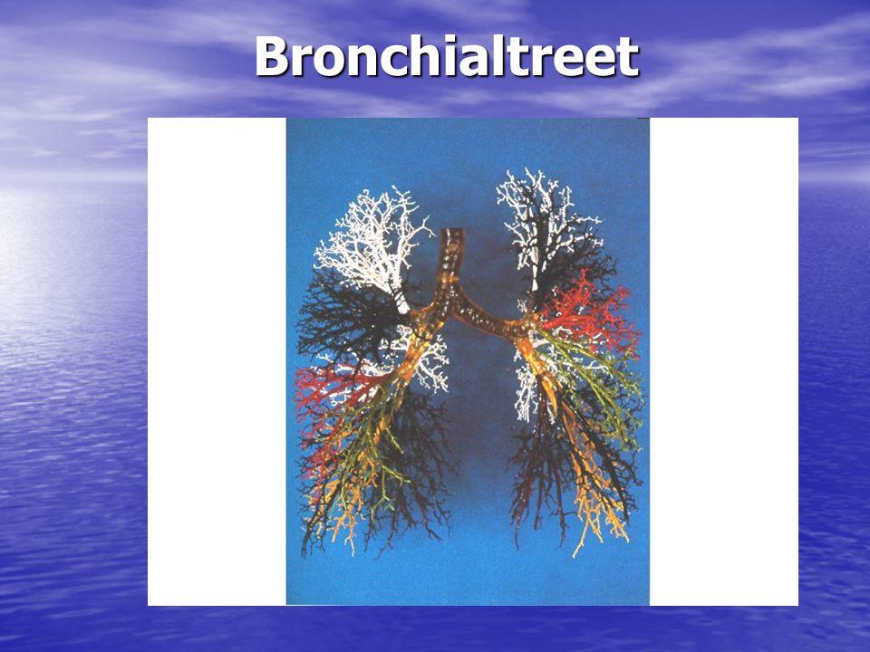 Bronchialtreet