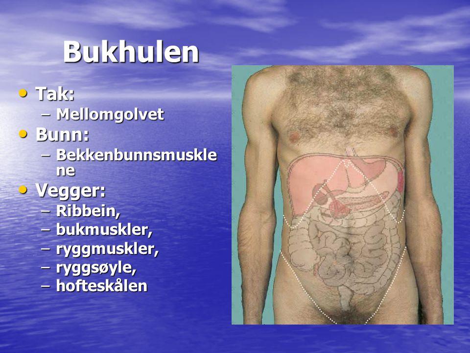 Bukhulen Tak: Bunn: Vegger: Mellomgolvet Bekkenbunnsmusklene Ribbein,