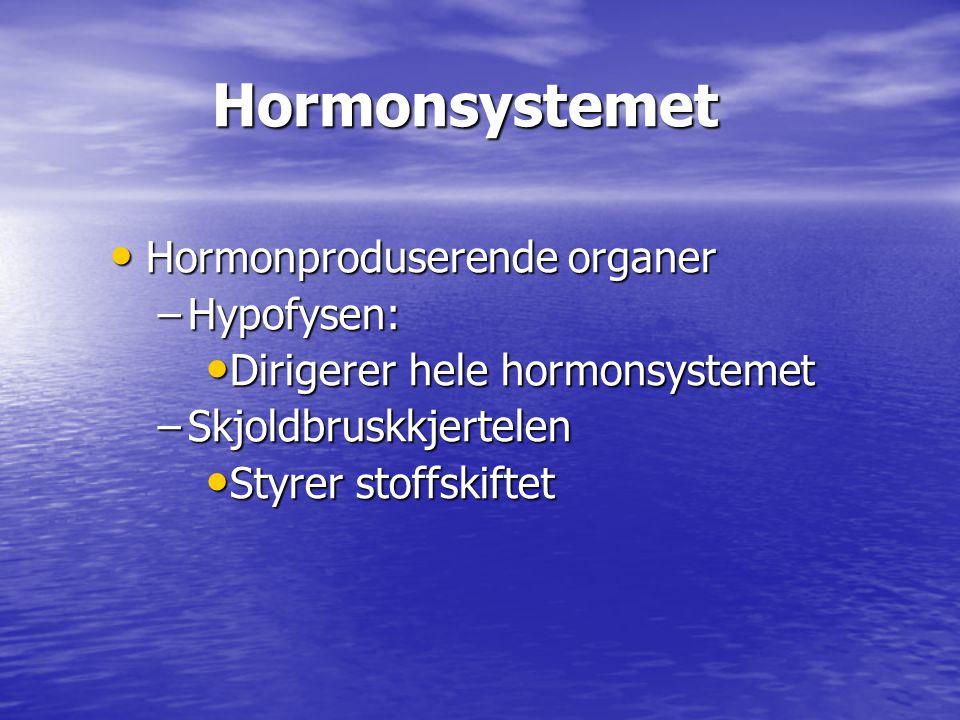 Hormonsystemet Hormonproduserende organer Hypofysen: