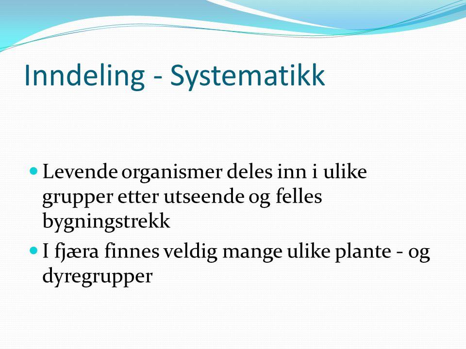 Inndeling - Systematikk