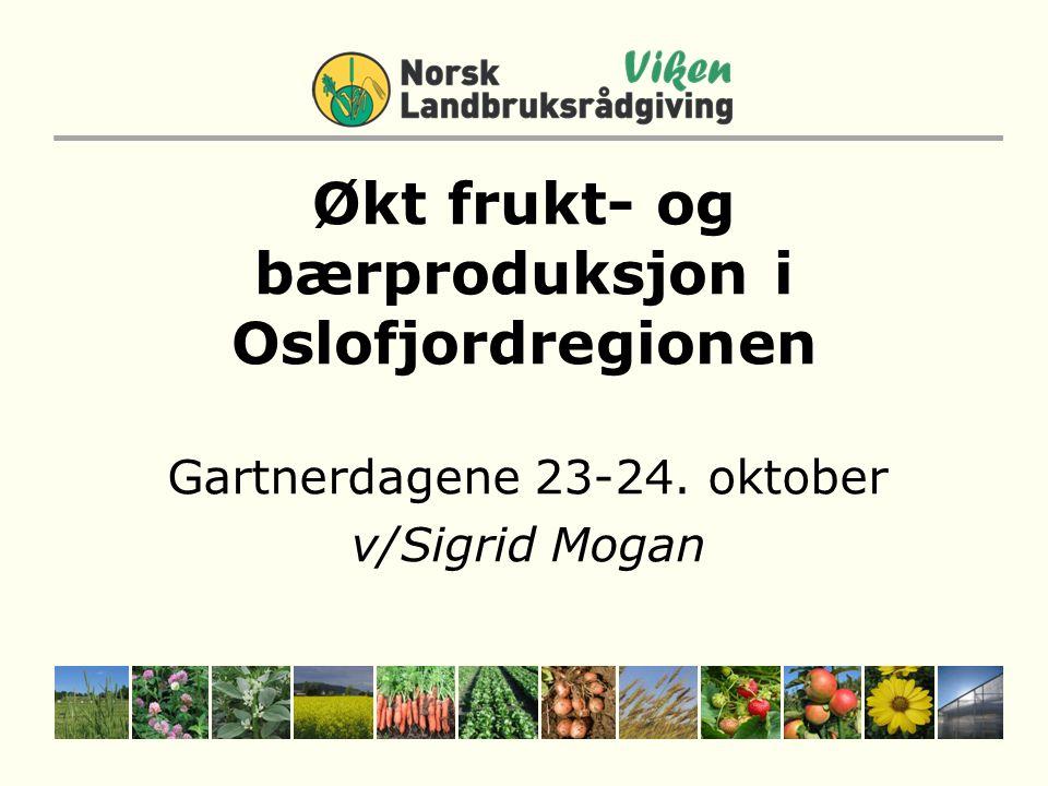 Økt frukt- og bærproduksjon i Oslofjordregionen
