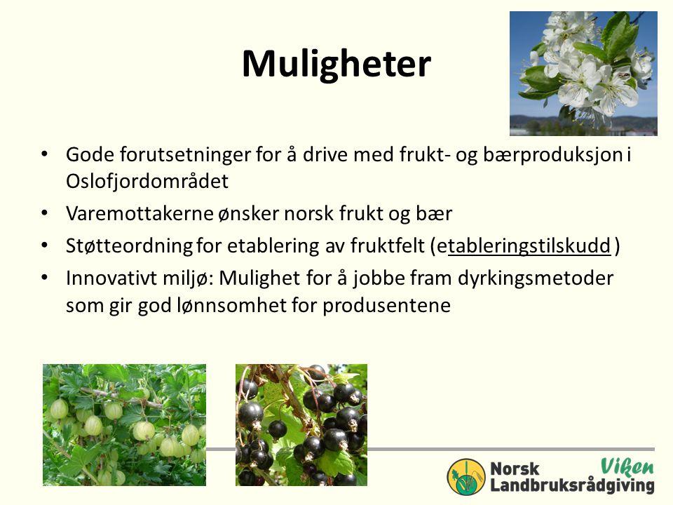 Muligheter Gode forutsetninger for å drive med frukt- og bærproduksjon i Oslofjordområdet. Varemottakerne ønsker norsk frukt og bær.