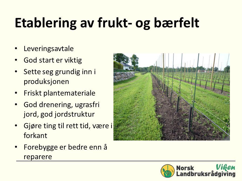 Etablering av frukt- og bærfelt