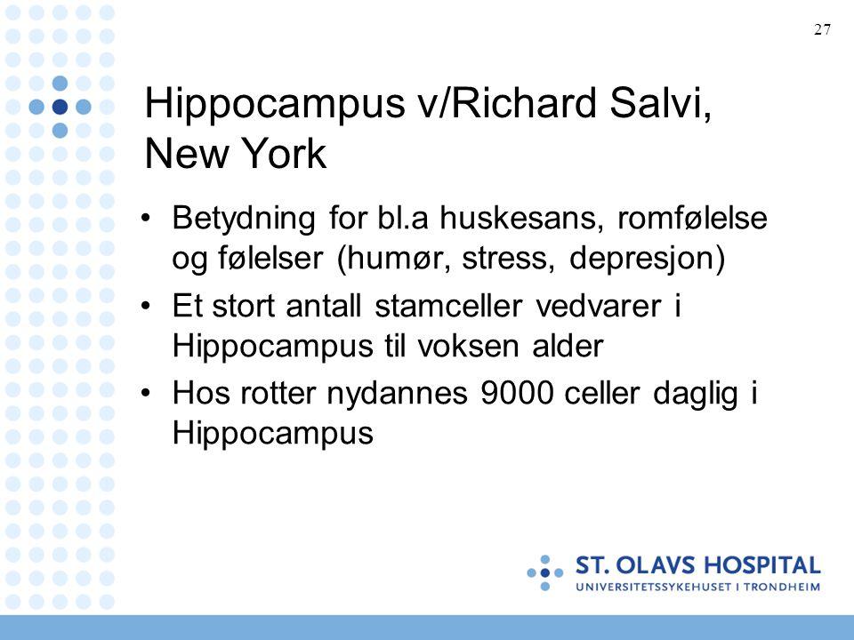 Hippocampus v/Richard Salvi, New York