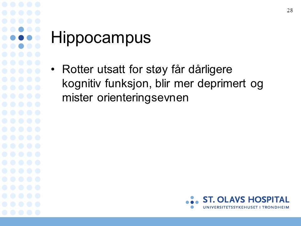 Hippocampus Rotter utsatt for støy får dårligere kognitiv funksjon, blir mer deprimert og mister orienteringsevnen.