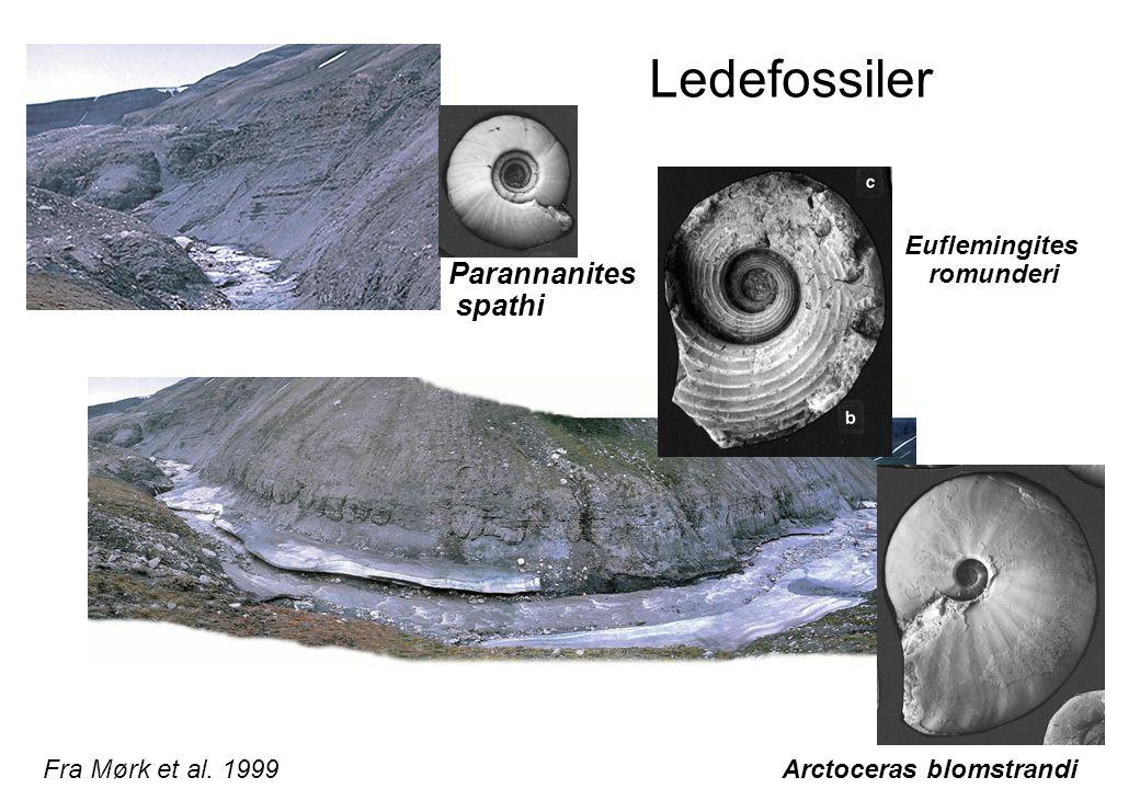 Euflemingites romunderi Arctoceras blomstrandi