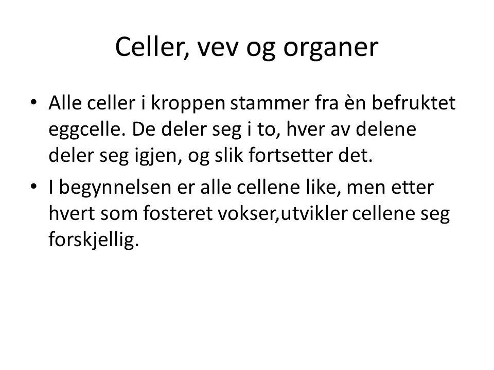 Celler, vev og organer