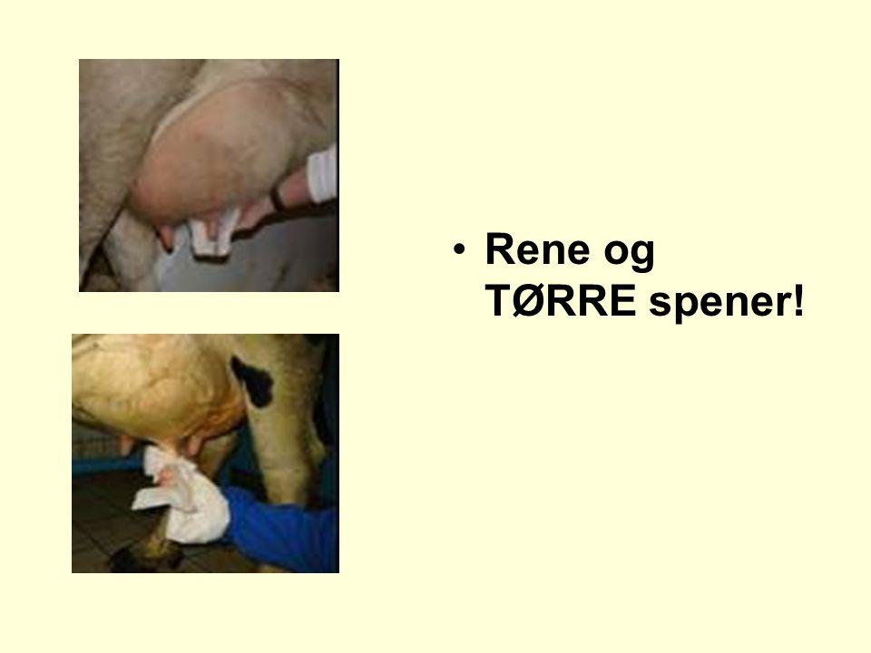Rene og TØRRE spener!