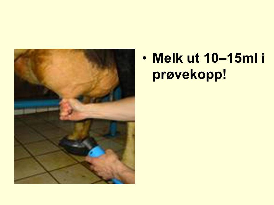 Melk ut 10–15ml i prøvekopp!