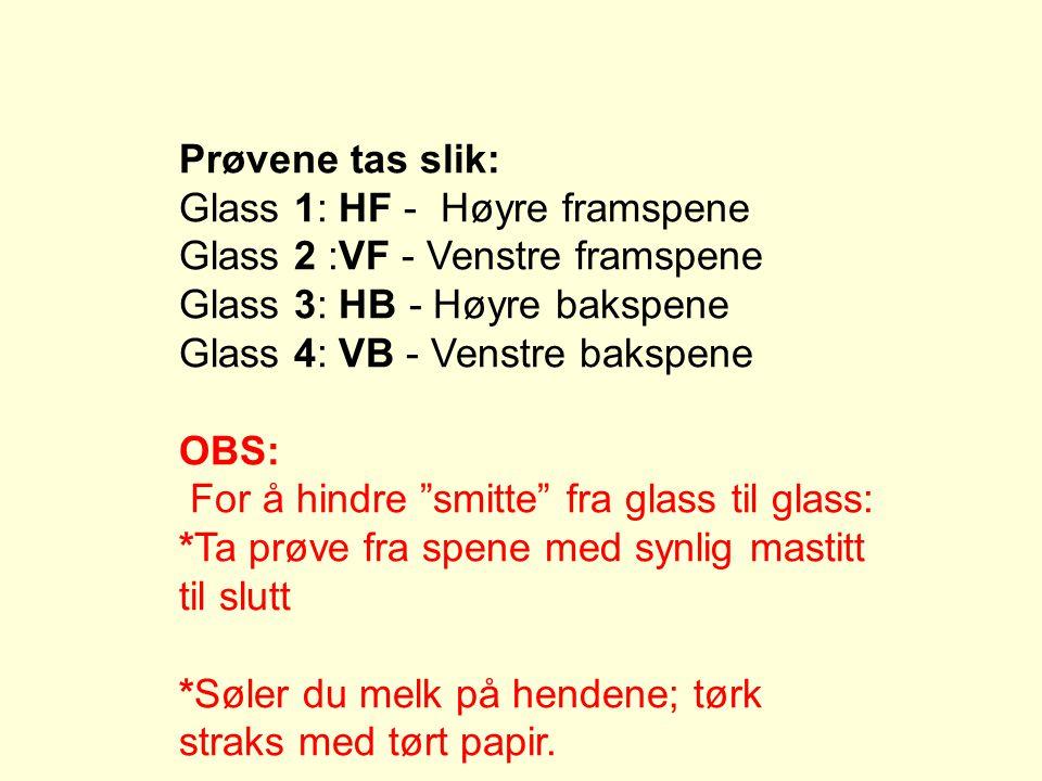 Prøvene tas slik: Glass 1: HF - Høyre framspene. Glass 2 :VF - Venstre framspene. Glass 3: HB - Høyre bakspene.