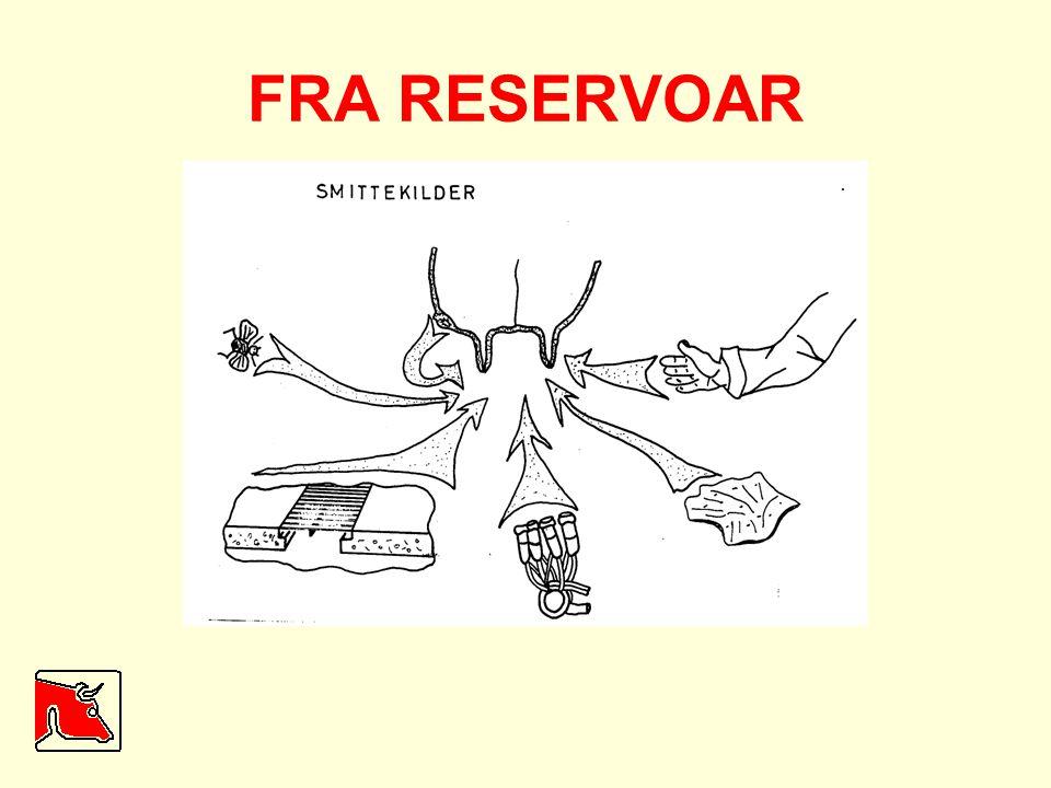 FRA RESERVOAR Bildet viser noen eksempler på bakteriereservoar.
