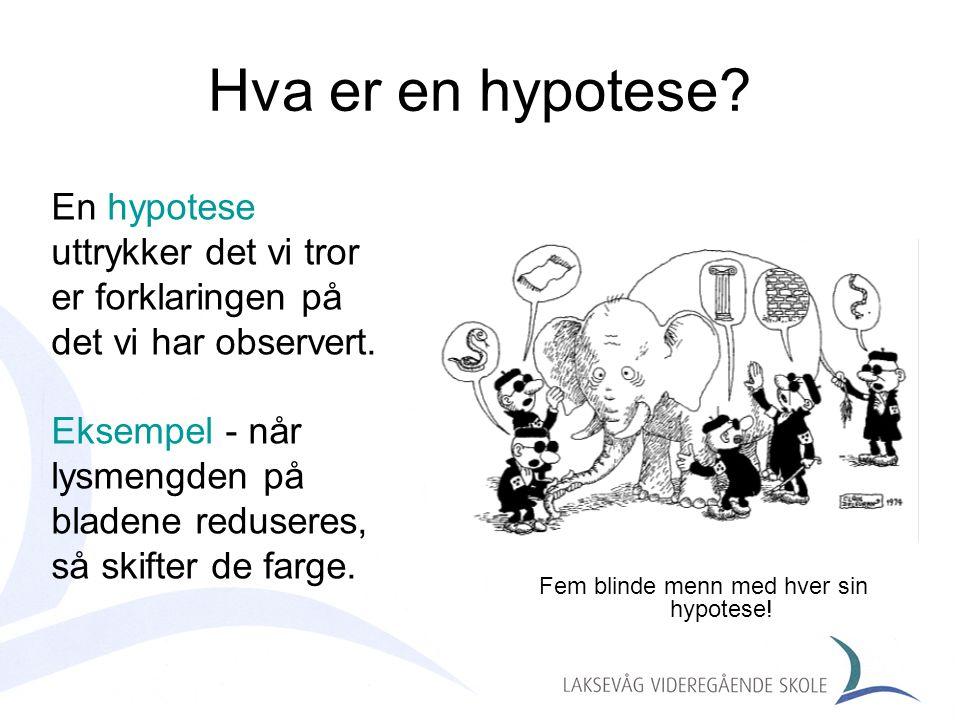 Fem blinde menn med hver sin hypotese!