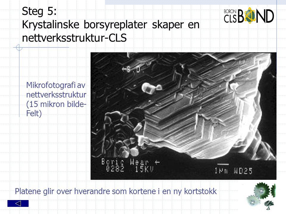Steg 5: Krystalinske borsyreplater skaper en nettverksstruktur-CLS