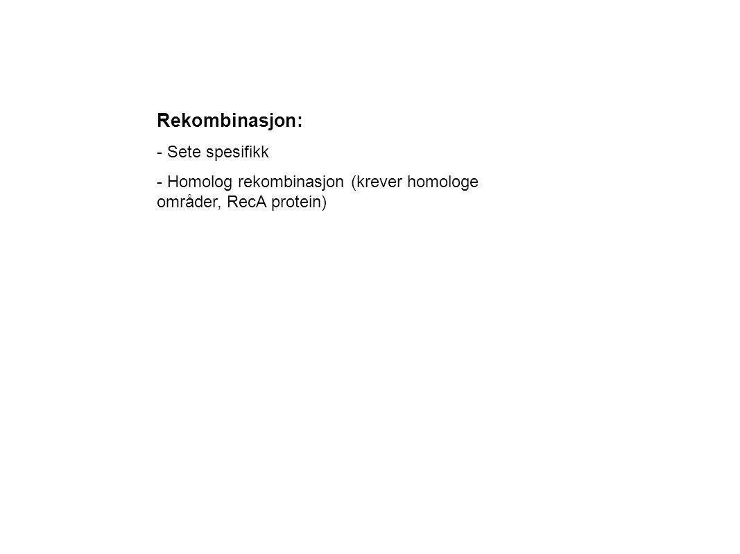 Rekombinasjon: - Sete spesifikk