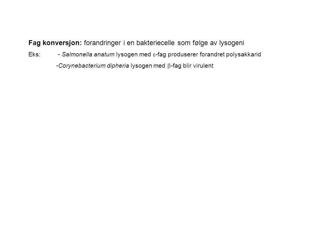 Fag konversjon: forandringer i en bakteriecelle som følge av lysogeni