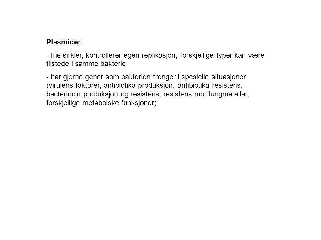 Plasmider: frie sirkler, kontrollerer egen replikasjon, forskjellige typer kan være tilstede i samme bakterie.