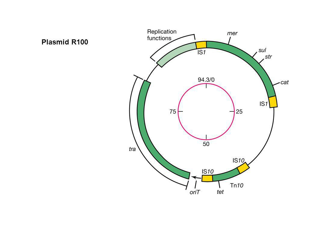 Plasmid R100 Figure: 10-19 Caption: