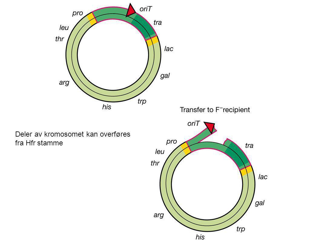 Deler av kromosomet kan overføres fra Hfr stamme