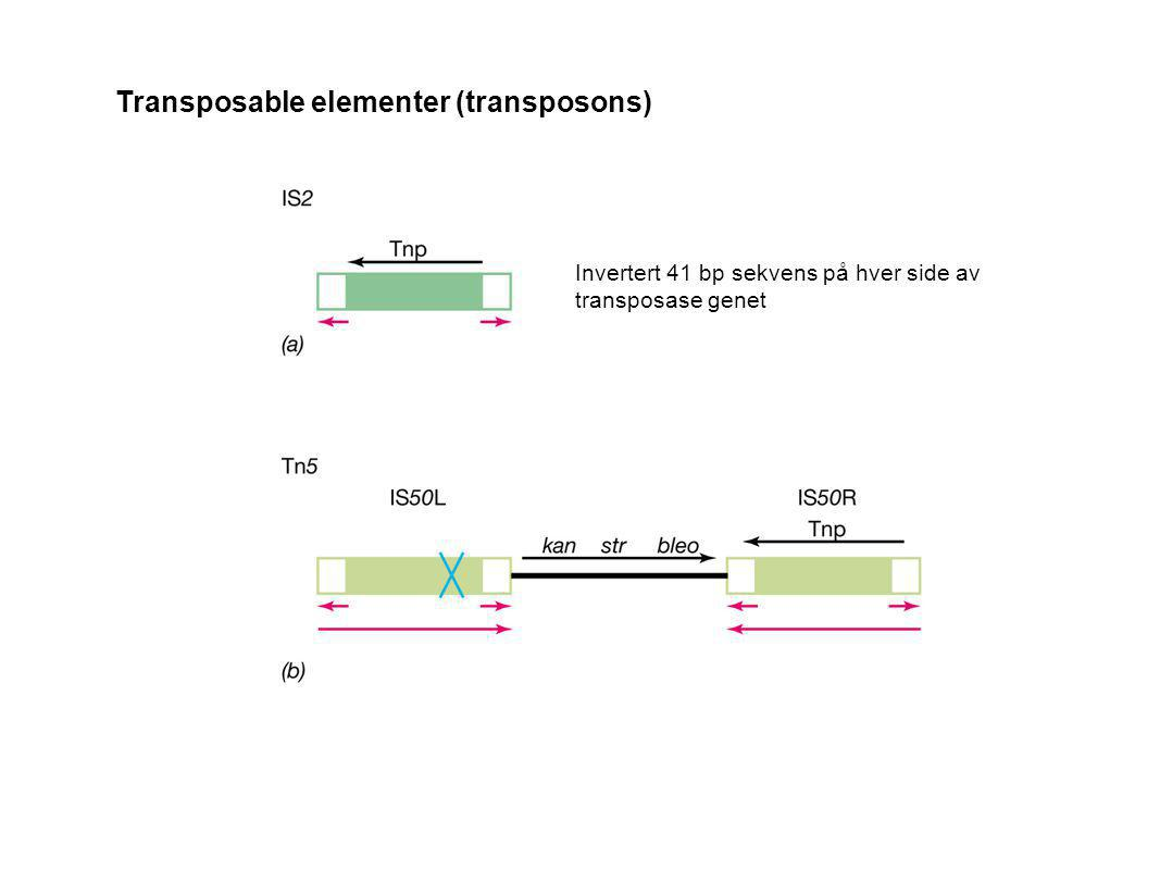 Transposable elementer (transposons)