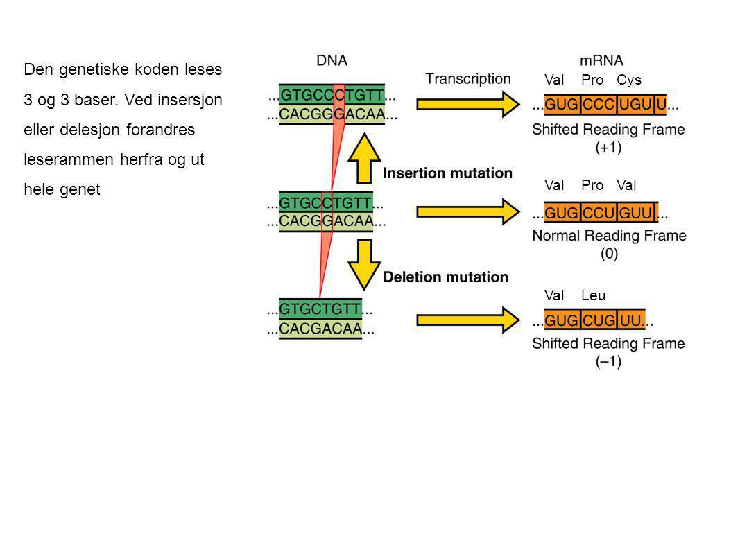 Den genetiske koden leses 3 og 3 baser. Ved insersjon