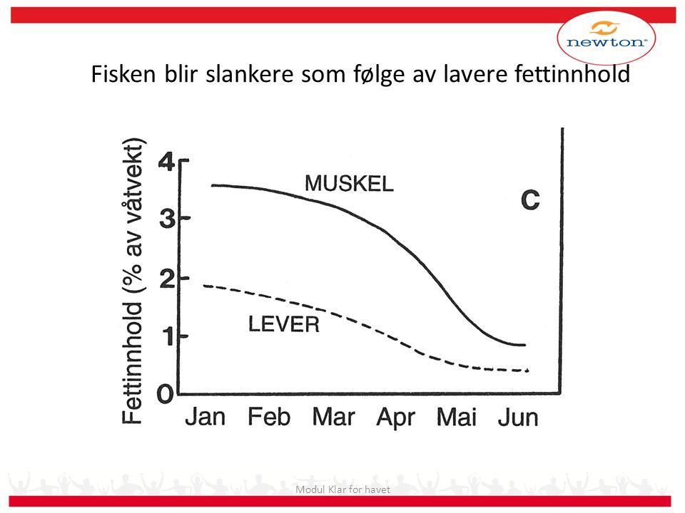 Fisken blir slankere som følge av lavere fettinnhold