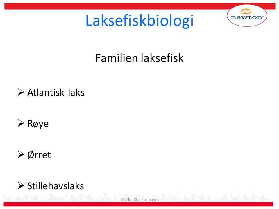 Laksefiskbiologi Familien laksefisk Atlantisk laks Røye Ørret