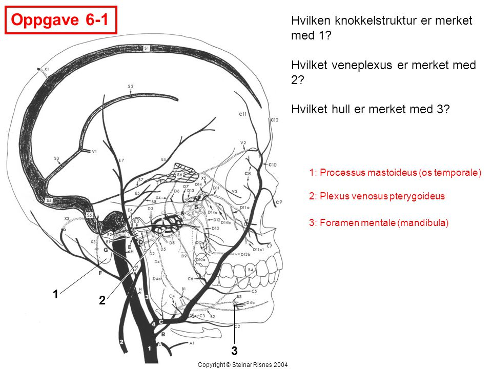 Oppgave 6-1 Hvilken knokkelstruktur er merket med 1