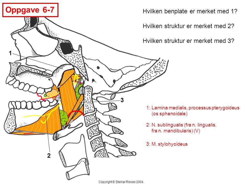 Oppgave 6-7 Hvilken benplate er merket med 1