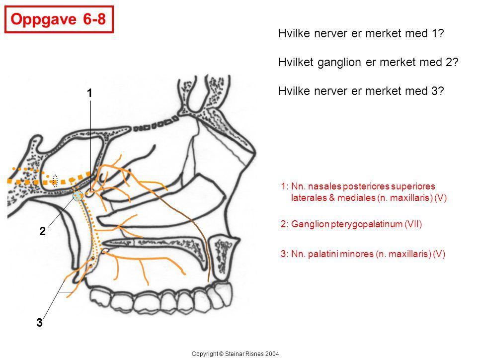 Oppgave 6-8 Hvilke nerver er merket med 1