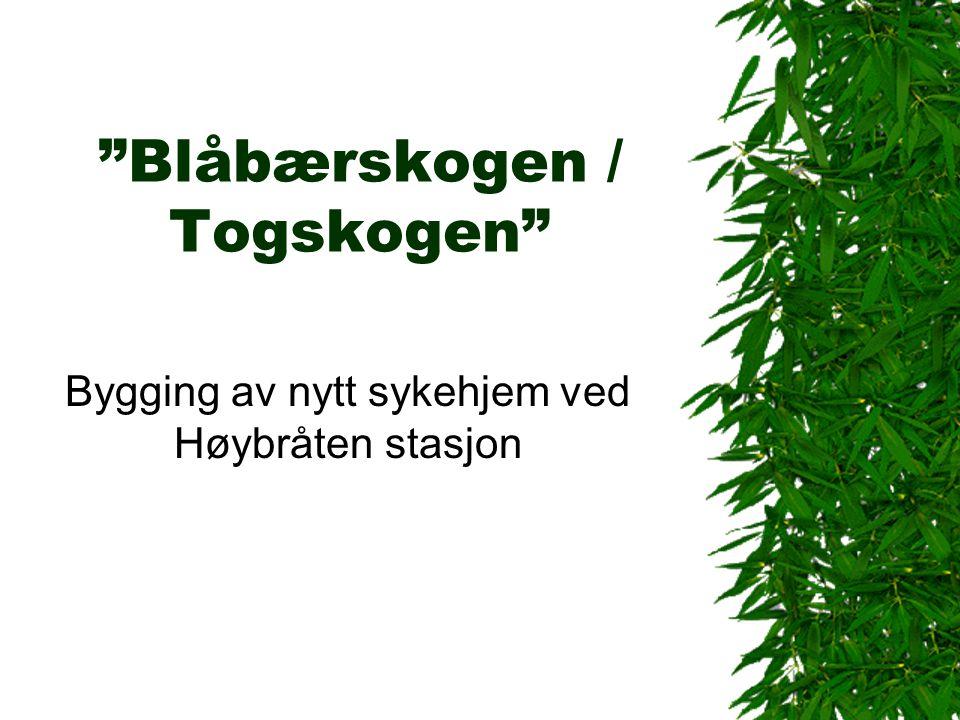 Blåbærskogen / Togskogen