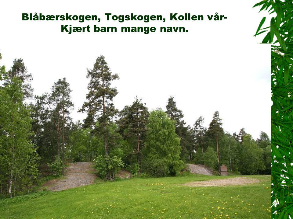 Blåbærskogen, Togskogen, Kollen vår-Kjært barn mange navn.