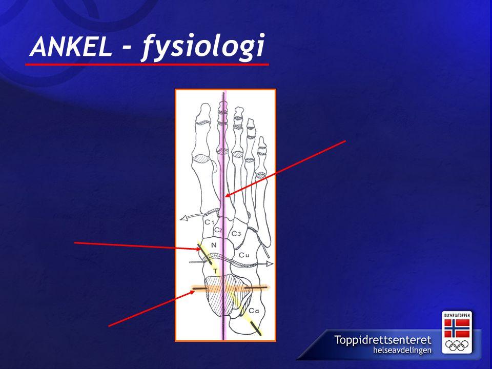 ANKEL - fysiologi